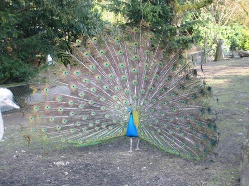 Im Vogelpark bei Detmold