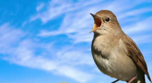 nightingale-are-singing